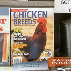 Chicken magazines - Petaluma